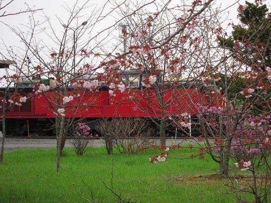 桜とDE152510